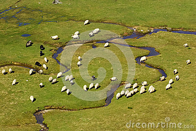 A group of sheep on a mountain river