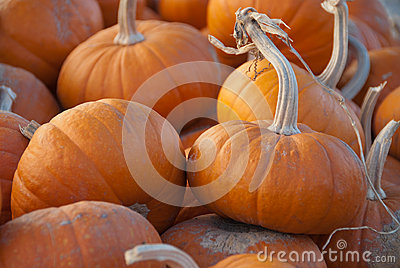 Group of small pumpkins