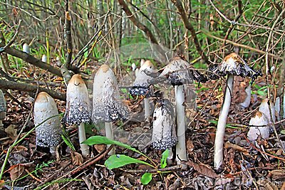 Group toadstool