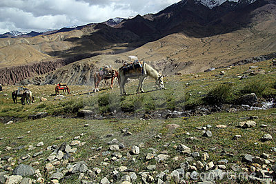 Group of trekking horses in  beautiful mountain la