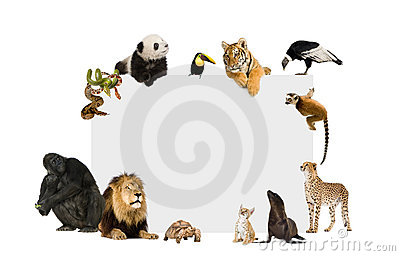 Group of wild animals around a blank poster