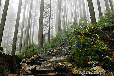 Grouse Grind Hiking Trails