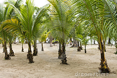 Grove of Palm Trees for Conservation