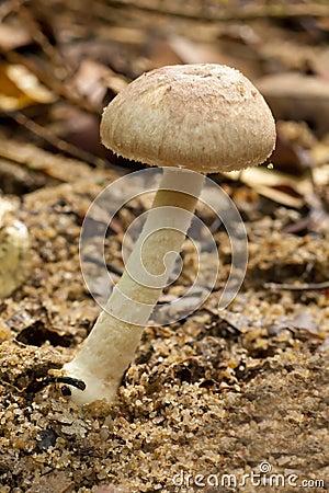 Grow up mushroom