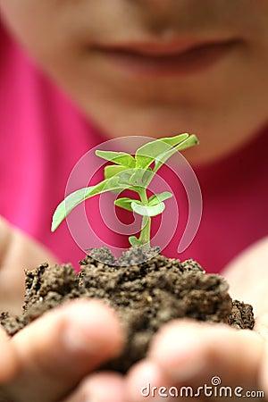 Free Growht Sapling Stock Photos - 14540583
