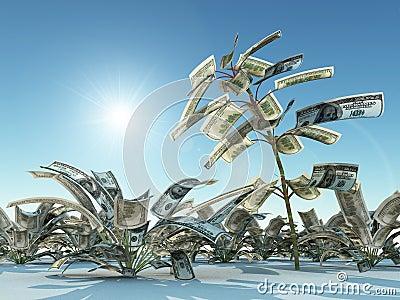 Growing dollars