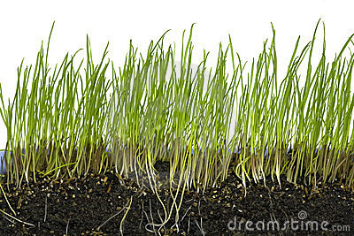 Growing grass in six stages