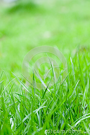 Green grass with sunshine