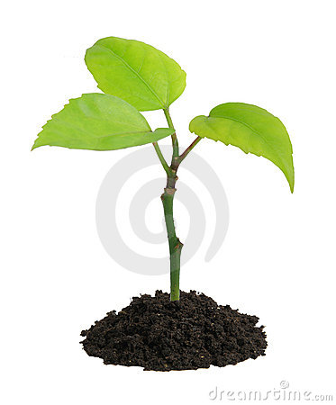 Free Growing Green Plant In A Hand Royalty Free Stock Images - 4211819