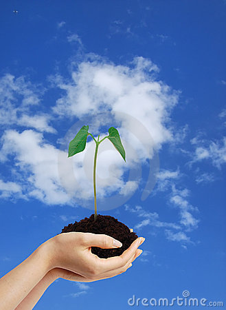 Free Growing Green Plant In The Hands Royalty Free Stock Photo - 6796775