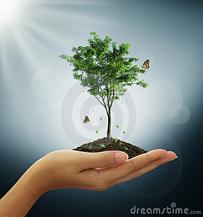 Free Growing Green Tree Plant In A Hand Stock Image - 22282941