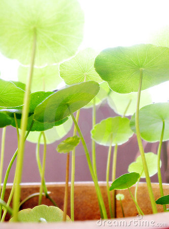 Free Growing In The Bright Sunlight Stock Photo - 5245560