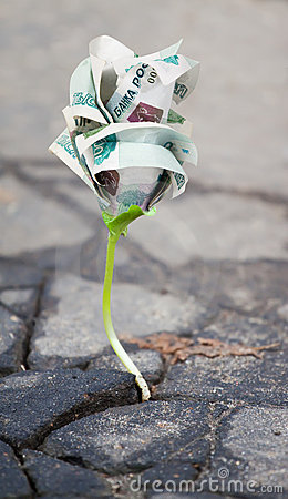 Growing  money sprout in asphalt