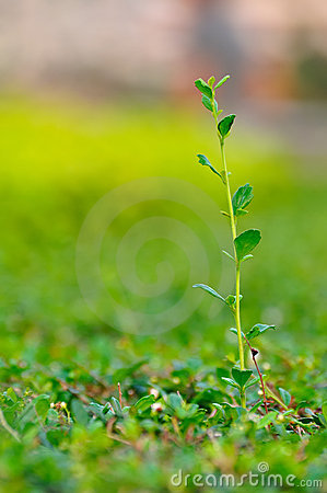 Free Growing Plant Royalty Free Stock Photos - 19263308