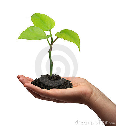 Free Growing Plant Royalty Free Stock Image - 3599466