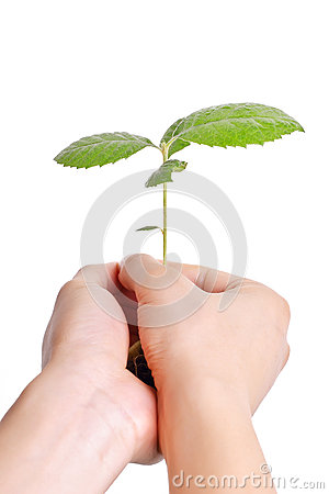 Growing plant in human hands