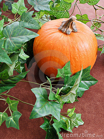 Growing A Pumpkin