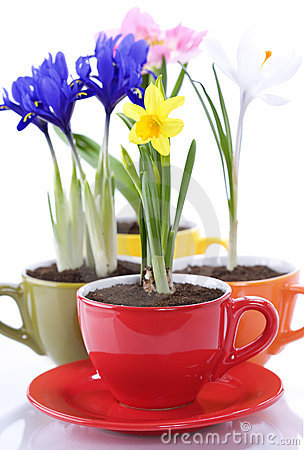 Free Growing Spring Flowers In A Cup Stock Photos - 14004653