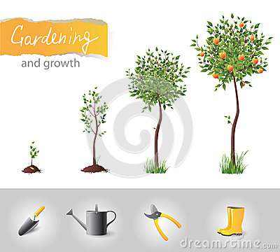 Growing tree