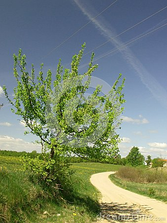 Growing tree at the countryside road