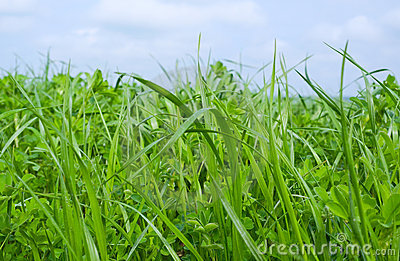 Grown grass.