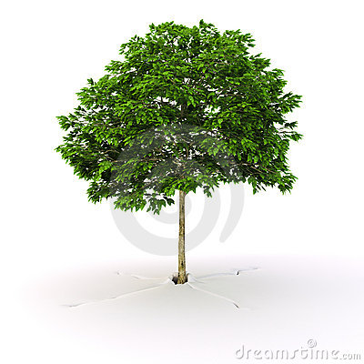 Grown tree