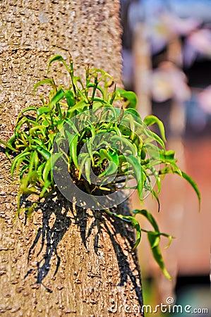 A growth leafs
