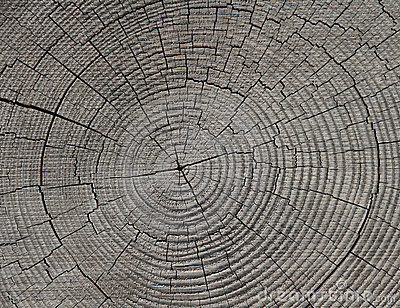 Growth Rings - Tree Rings - Annual Rings