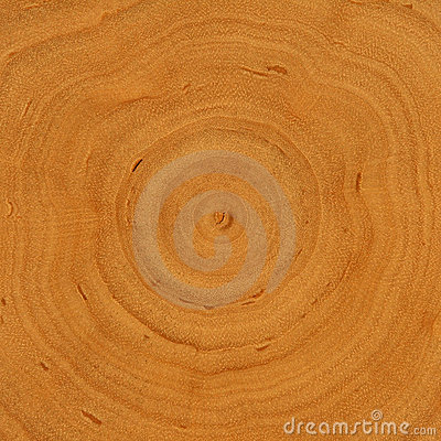 Growth rings - wooden background