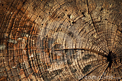 Growth rings wooden background