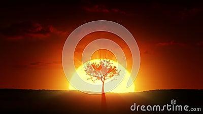 Growyh eines Baums bei Sonnenaufgang