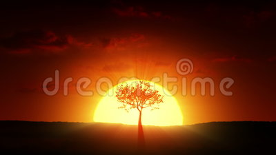 Growth of a tree at sunrise
