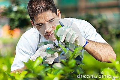 Gärtner, der im Gewächshaus arbeitet