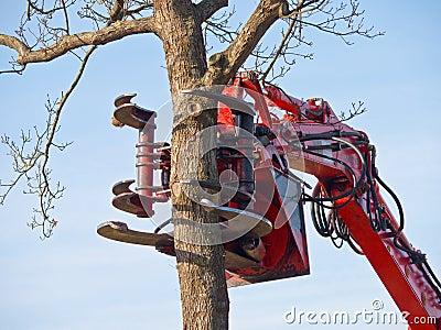 grue de d coupage d 39 arbre environ pour couper un arbre photographie stock image 27474302. Black Bedroom Furniture Sets. Home Design Ideas