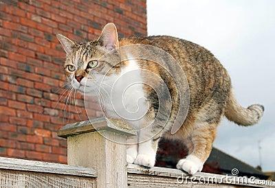Grumpy cat on garden fence