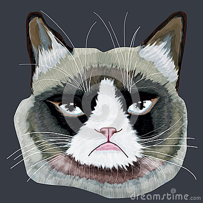 Free Grumpy Cat Head Stock Photography - 53340722