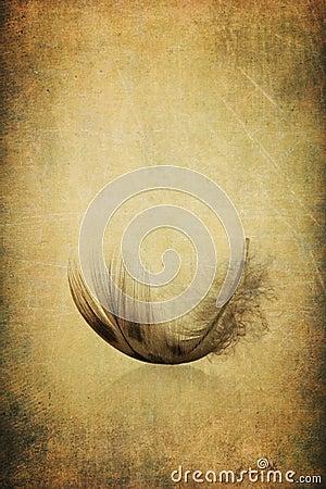被构造的古色古香的背景羽毛grunge