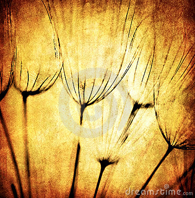 Grunge abstract dandelion flower background