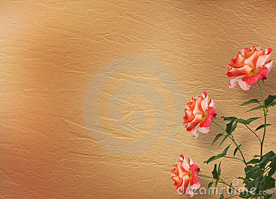 Grunge background with beautiful rose