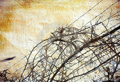 Grunge background with grape-vine over barbed wire