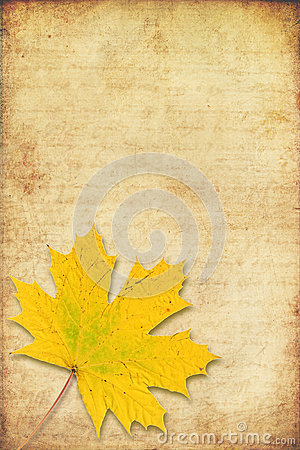 Grunge background with maple autumn leave