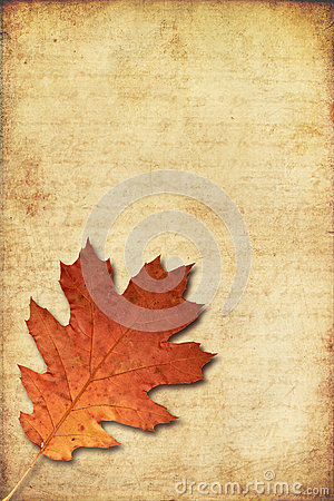 Grunge background with oak autumn leave