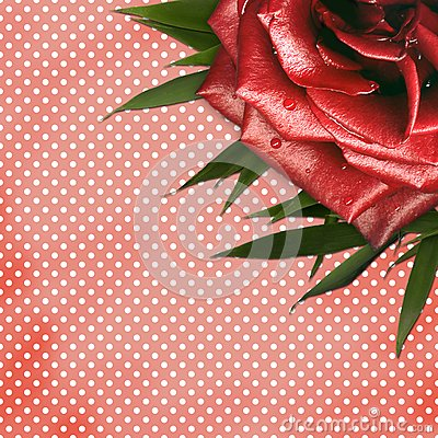 Grunge background with red rose for design
