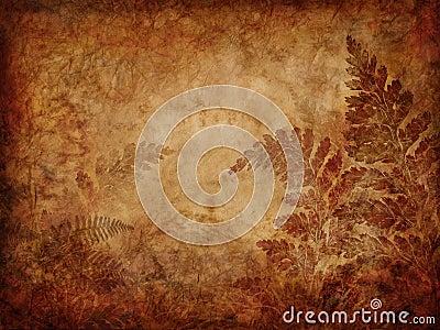 Grunge fern background