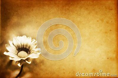 Grunge flower Paper