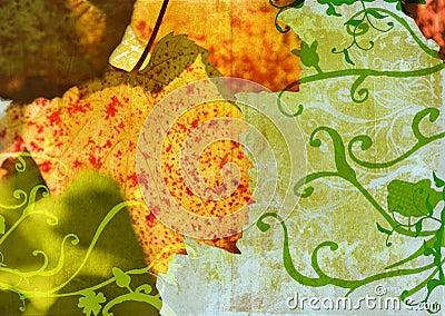 Grunge grape vine leaf
