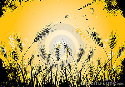 Grunge grass and ears, vector