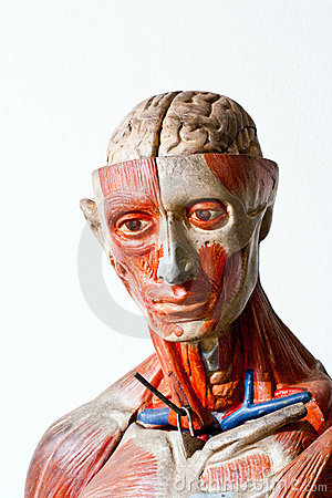 Grunge human anatomy