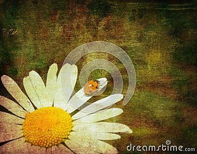 Grunge image of a ladybug