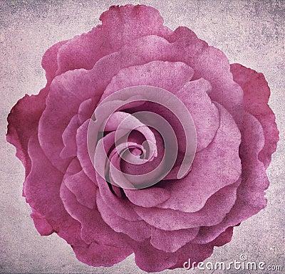 Grunge Lavender Rose